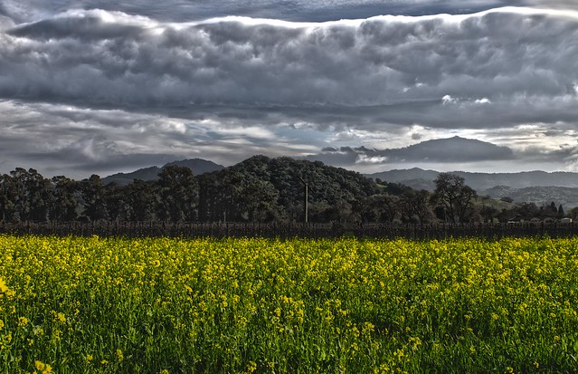 Clouds Over Napa_HDR2