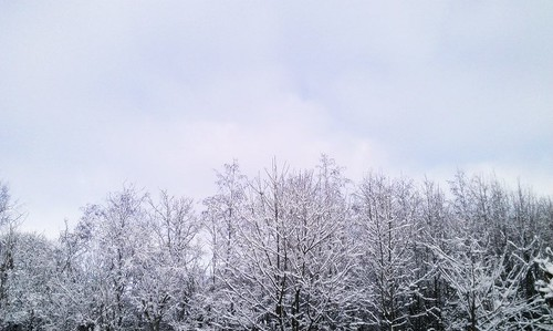 trees winter sky snow frost