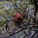 Bromeliads - Bromelias entre San Juan Tabaá y Villa Alta, Districto Villa Alta, Región Sierra Juárez, Oaxaca, Mexico por Lon&Queta