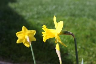 spring flower_034