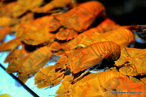 lobster15