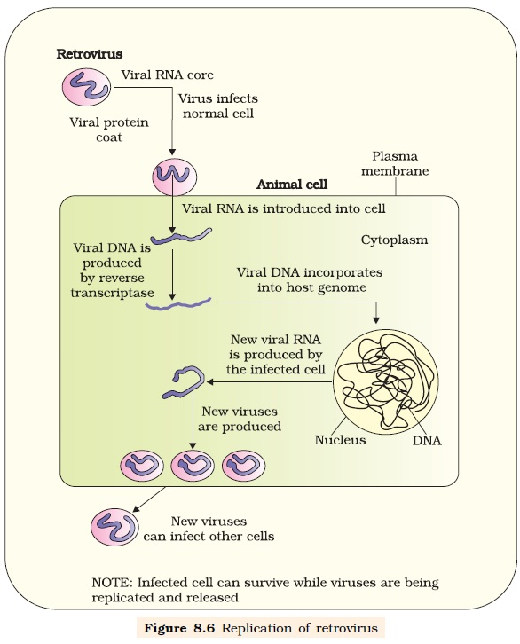 biology and life cycle of hiv Hiv-1 replication cycle the latter steps of the hiv-1 life cycle chuang, cy, jeang, kt, and huang, lm molecular biology of human immunodeficiency virus.
