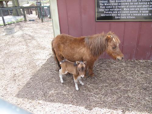 Tanglewood Farm 0174