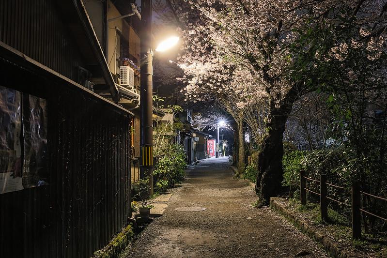 夜の哲学の道