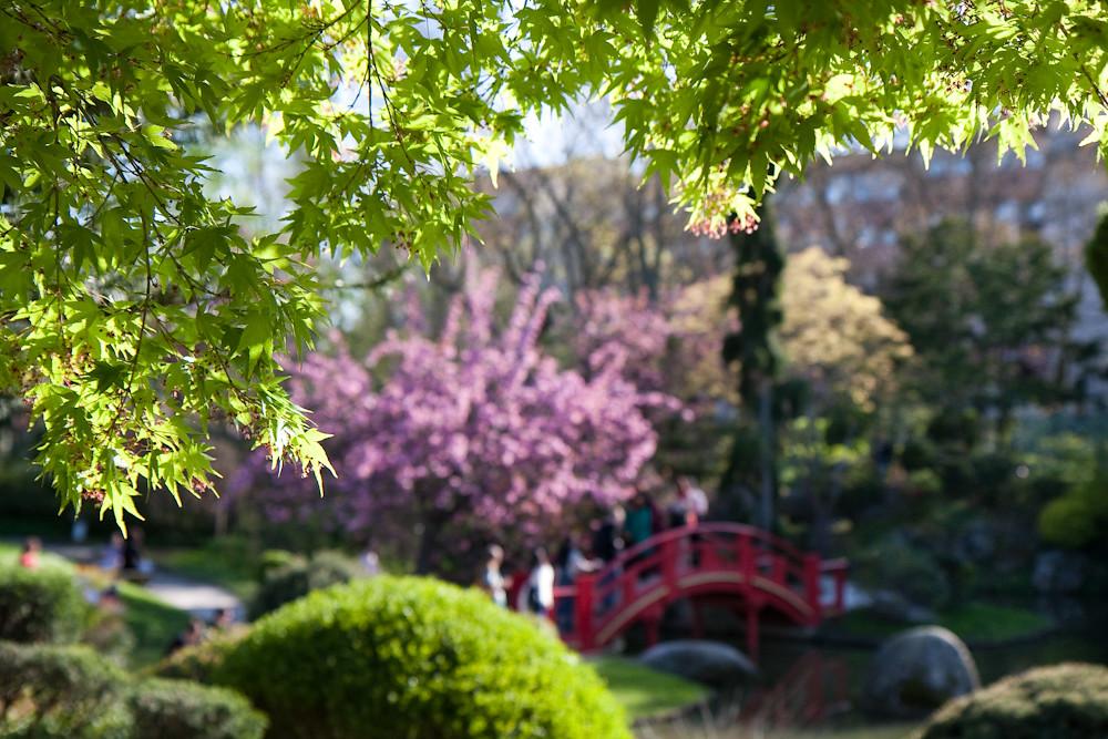 Jardin japonais#6 - Compans Caffarelli - Toulouse