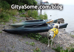 Husky dog at the lake to go kayaking