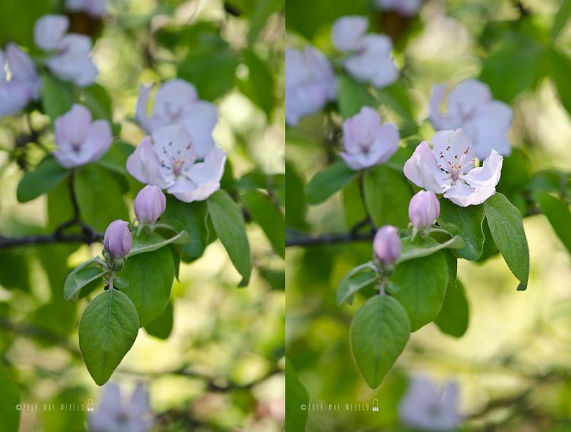 collage flor