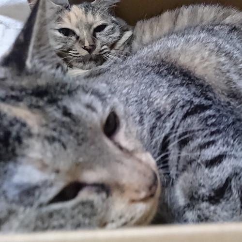 母娘で仲良く段ボール箱の中 by Chinobu