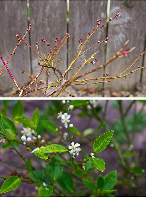 February Garden