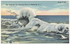 Sea gulls dip over breaking waves at Highlands, N.J.