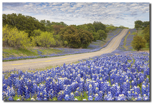 Texas Bluebonnet Highway, Texas Hill Country