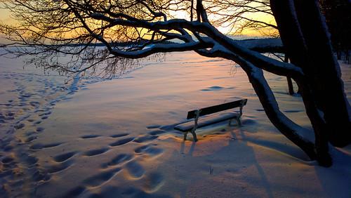 winter sunset tree mobile espoo suomi finland bench nokia twilight europe seat cellphone eu scandinavia talvi puu westend auringonlasku uusimaa 808 penkki evenfall istuin karhusaari phoneography hanki pureview linholmsfjärden nokiaukphotography