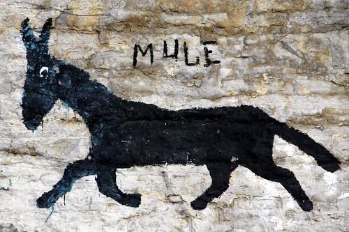 The Liberty Mule