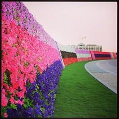 Wall of flowers & colors ♡♥♡ #instauae #instapic #instagood #dubai #flowers #colors