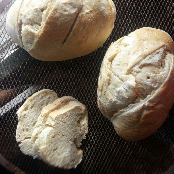Sourdough for #glutenfree @seanhagarty. #sourdough #bread