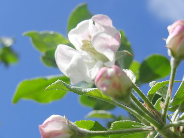 りんごやSUDA果樹園風景5_拡大