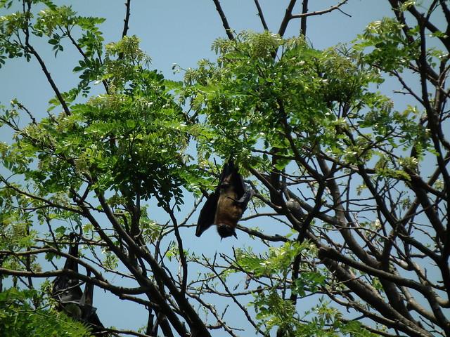 Sri lanka f vrier 2013 jardin botanique de peradeniya for Jardin fevrier