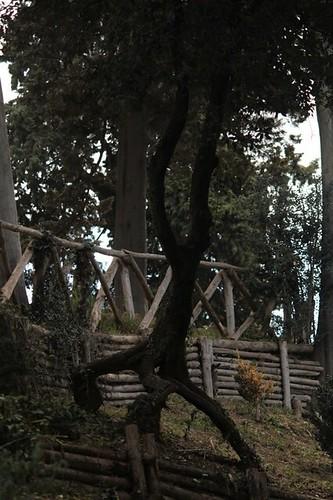 Villa Torlonia: albero particolare