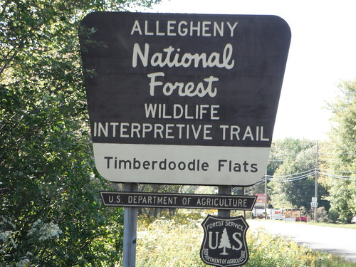 hiking alleghenynationalforest hikingwithdogs dayhiking timberdoodleflats timberdoodleflatsinterpretivetrail bluebirdloop woodcoockloop