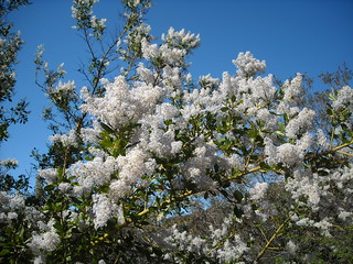 Topanga Flowers2