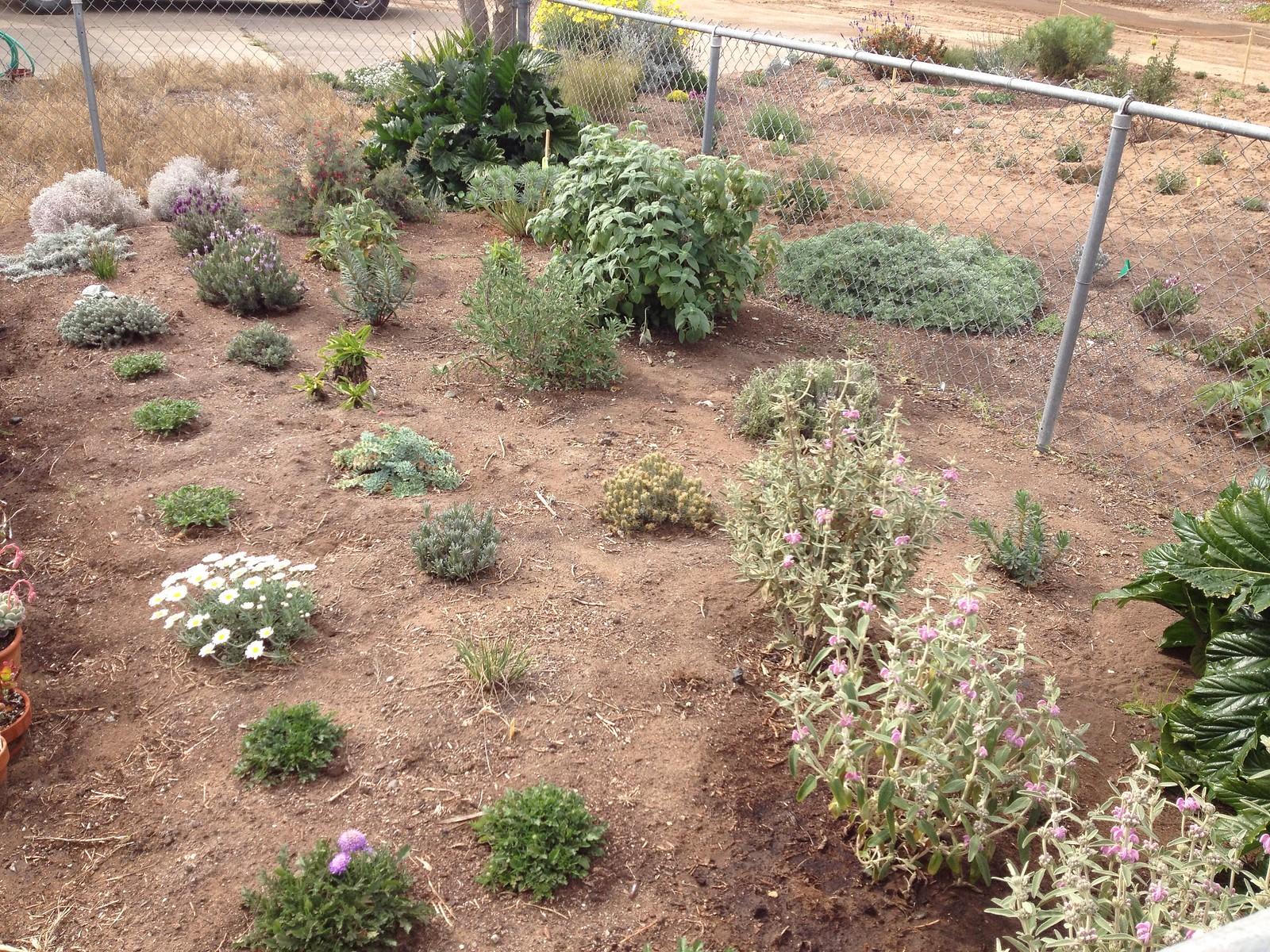 Mediterranean Garden | Plant Propaganda