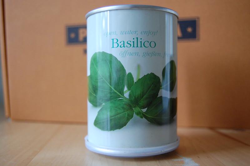 planta de albahaca en lata