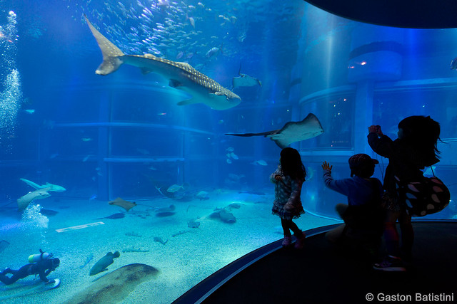 Osaka Aquarium Kaiyukan, Japan Flickr - Photo Sharing!