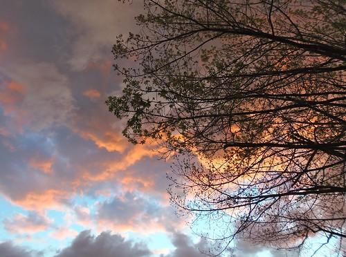 california sunset usa tree oak sacramento
