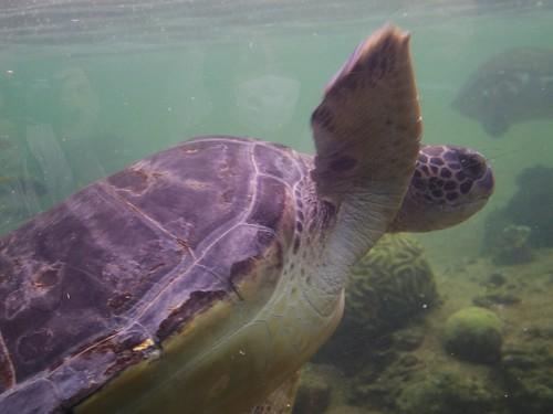Hakkei-Jima Sea Paradise