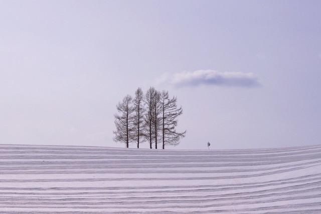 五本の木のある丘