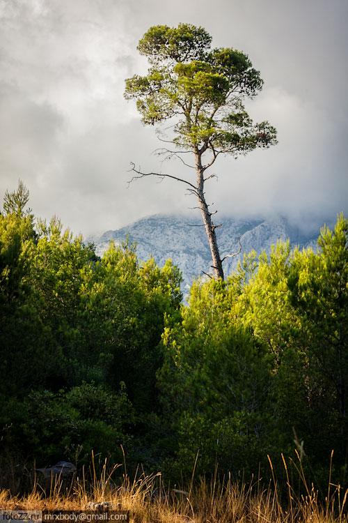 24-Wild-Makarska