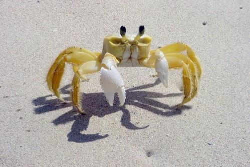 Из-за роста выбросов CO2 в океане появились гигантские крабы, омары и креветки