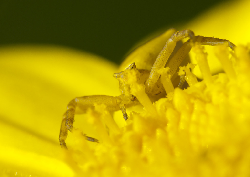 Amarillo inquietante