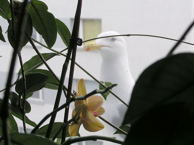Seagull observing tropics