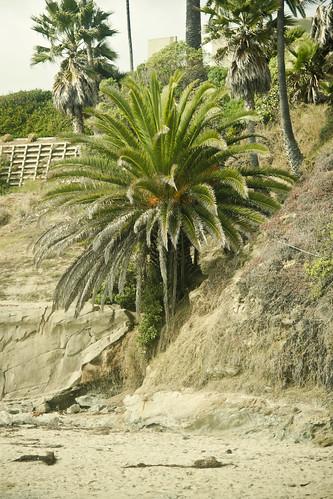 california-3544-10