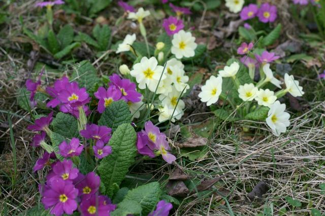 Joys of the Week #7, Gartenfreuden und das Glückspaket