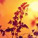 sunset by blueandyou.photography
