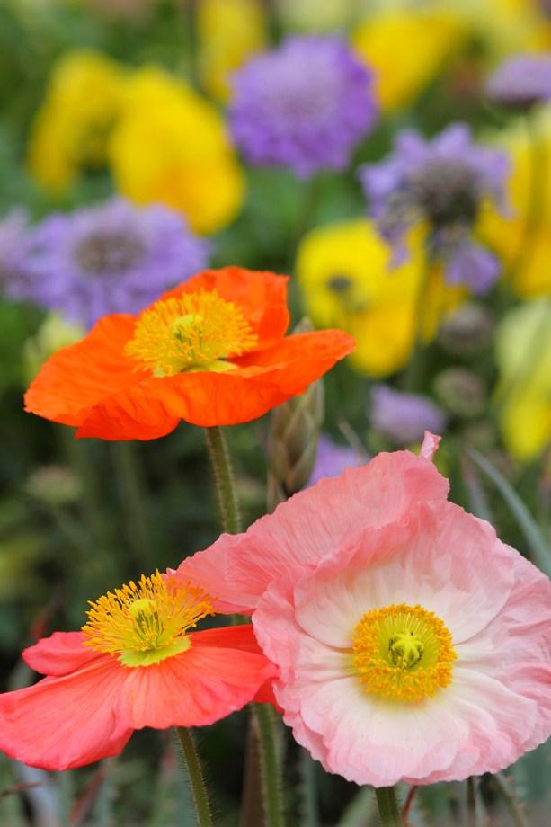 flower for Hummingbird 020413