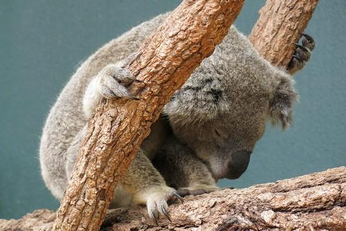 Wildlife Sydney Zoo -#6