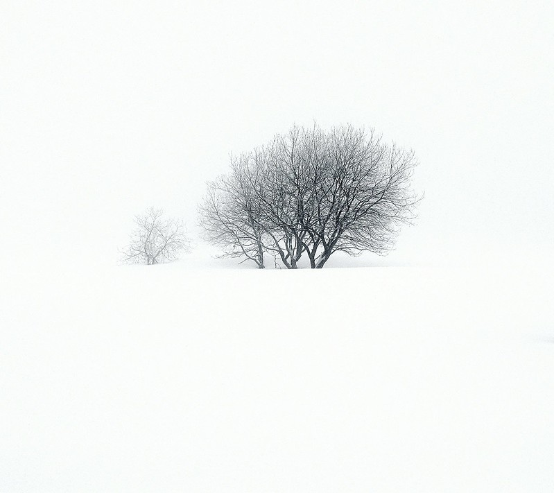 immersa nel bianco....