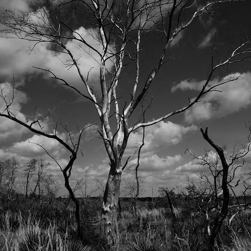 statepark sky tree florida manatee bradenton