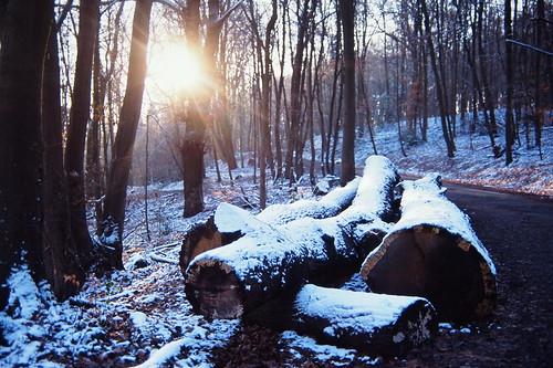 [フリー画像素材] 自然風景, 森林, 雪 ID:201303020600