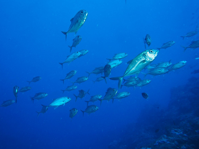 diving in the Yap Islands