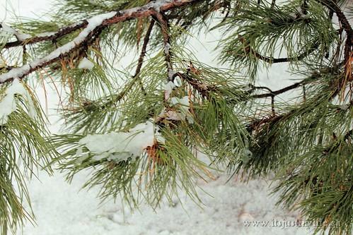 Snow Storm Toronto 2013 02 27 (2)