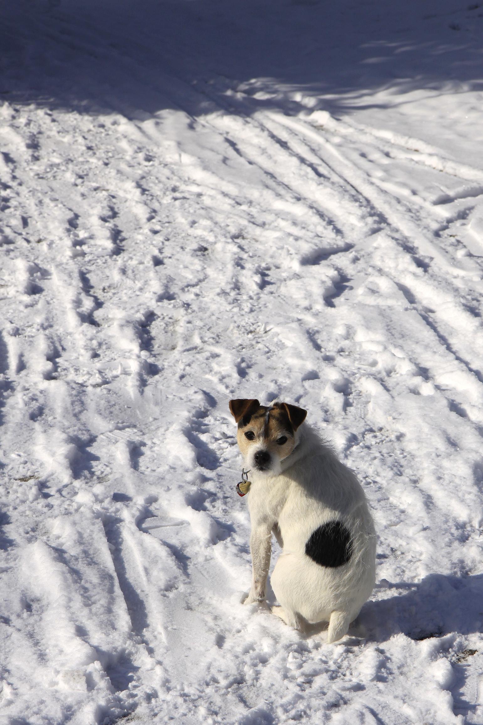 Benny snowsit