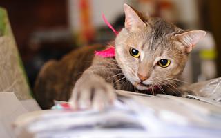 Katzen finden fast alles interessant ...