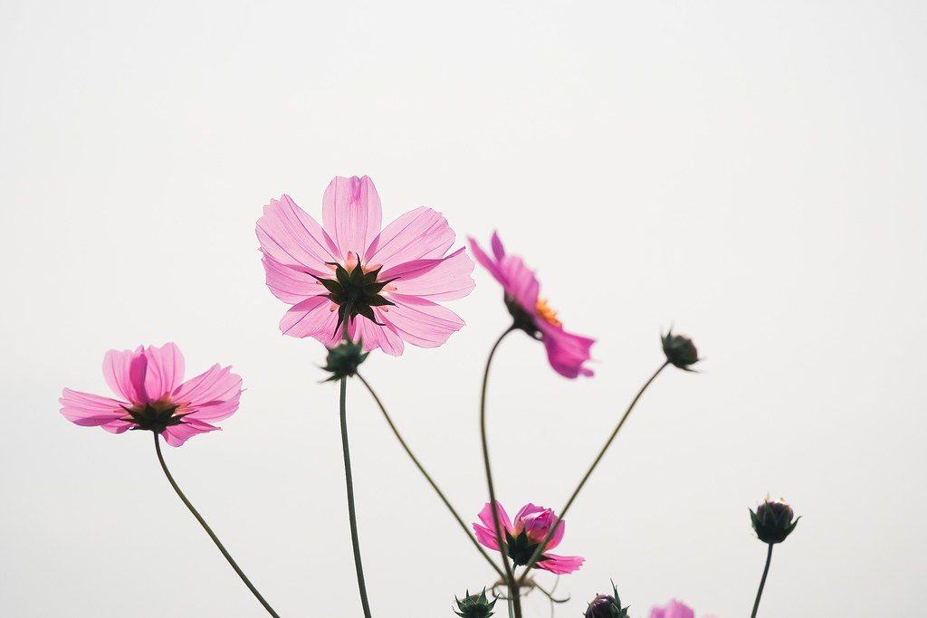 *Chiayi|花向天