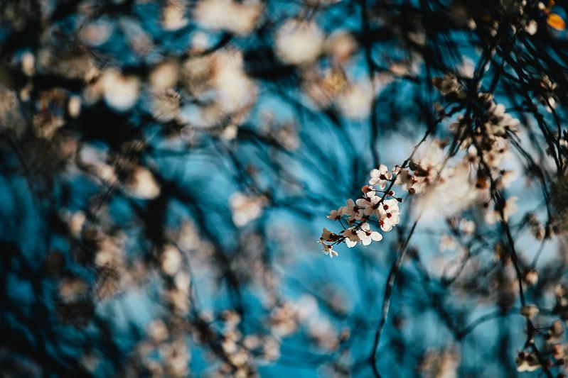 Blossom Time.