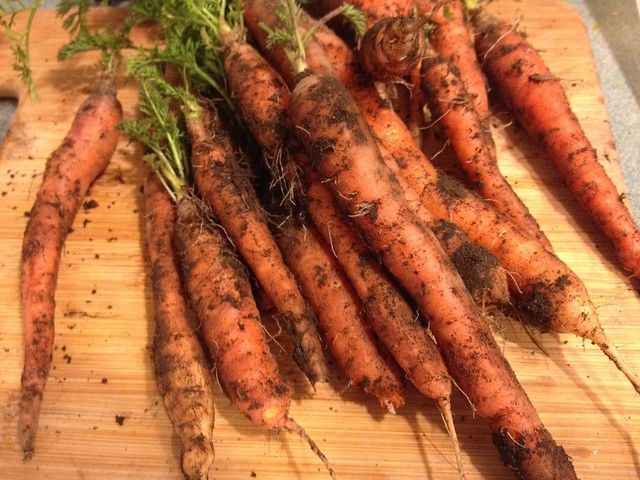 Overwintered carrots, for the corned beef tonight.