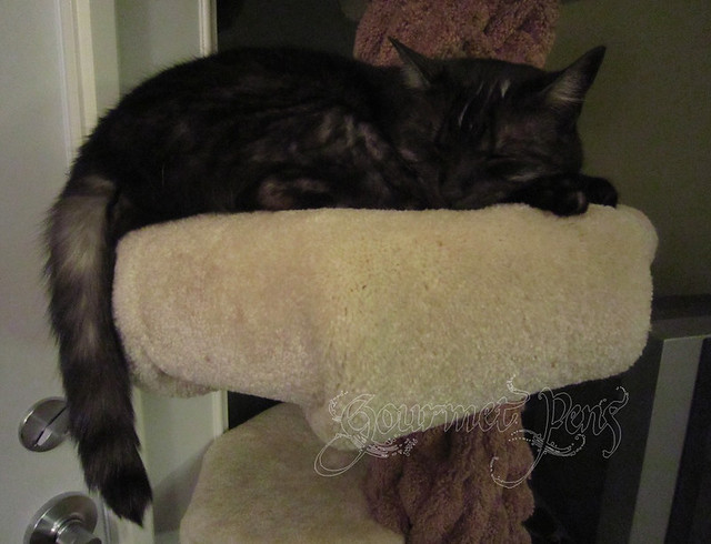 Angel on Cat Tree